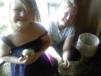 Baby Chicks Spring 2011