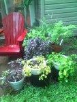 Patio Plants
