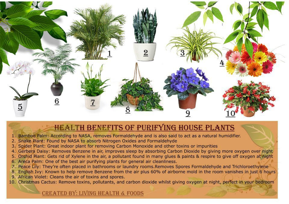 Health Benefits From Houseplants