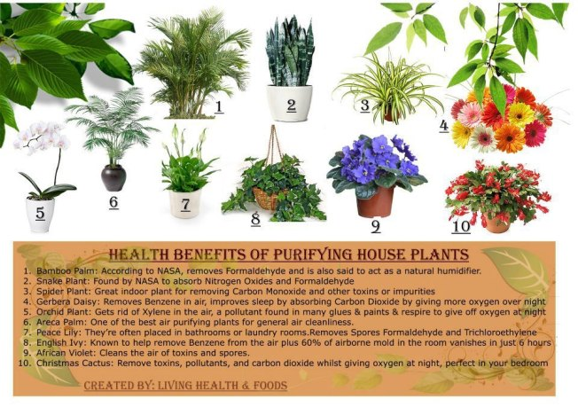 Health Benefits From Houseplants