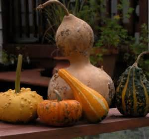 Gourds Harvest