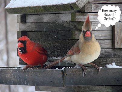 Cardinal Thinks Spring