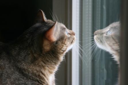 PennyLane reflecting