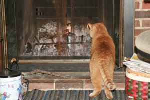 Jonas At The Fireplace