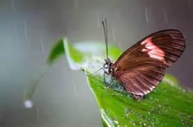 Butterfly In Rain