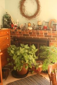 arrowhead-palm-plants