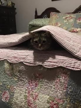 Pennylane Peeking