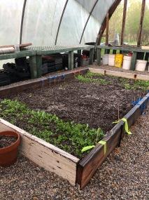 Greens Bed April 2019