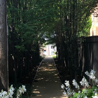 Clayton Summer Alley