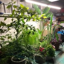 Basement Plant Light