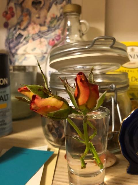 Ketschup & Mustard Bud Roses