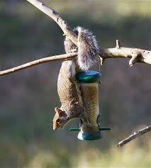 Squirrel & Feeder