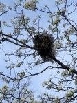 Squirrels' Nest